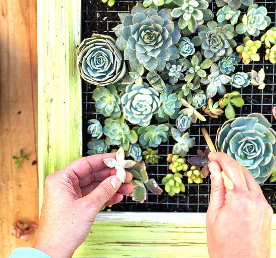 Сделать своими руками картину из цветов живых